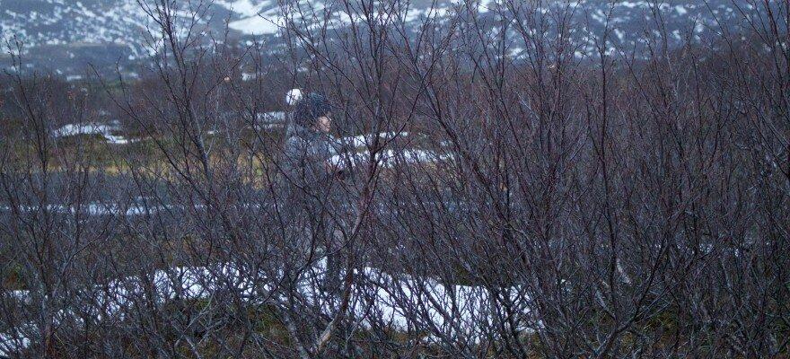 Blog Islande - Famille Puffin à la neige