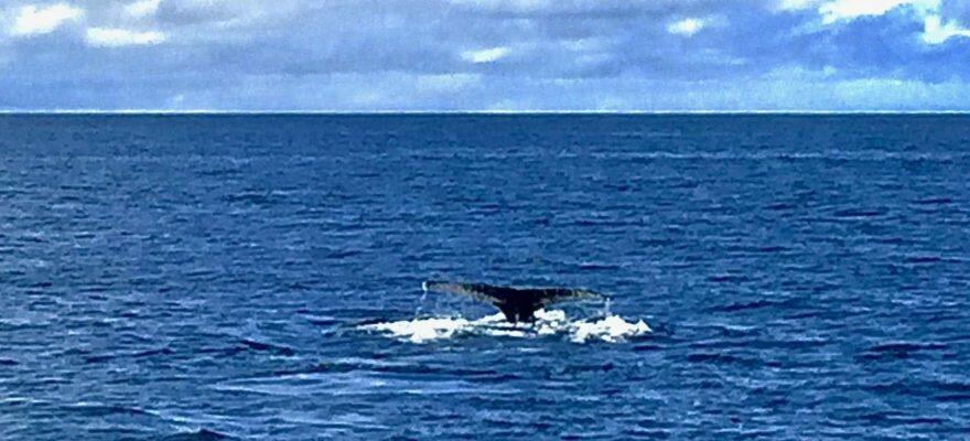 Blog Islande - Observation des baleines à Húsavík